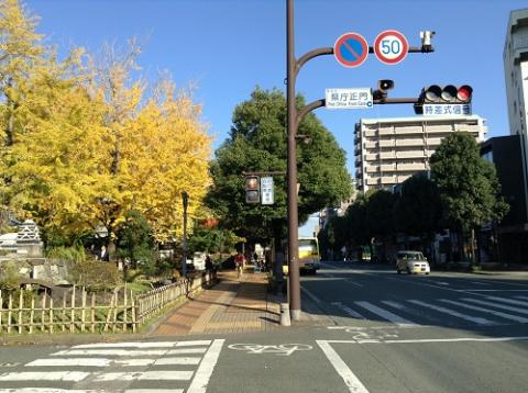 熊本県庁の銀杏並木の美しさにうっとりした
