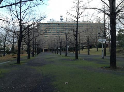 紅葉がすっかり終わってしまった冬の熊本県庁の銀杏並木