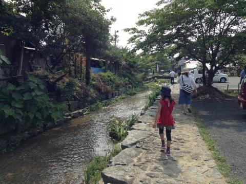 新谷花菖蒲園の「しょうぶまつり」を楽しむ