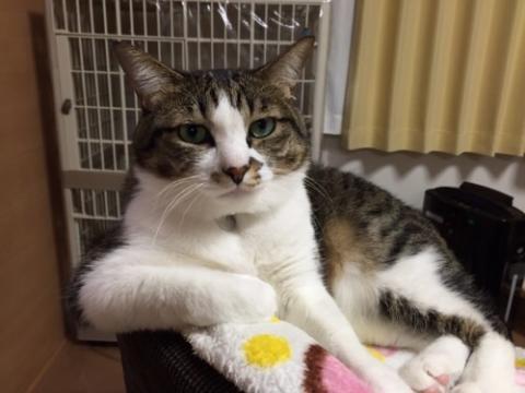 貫禄感溢れるおっさんのように見える猫ーゆきお