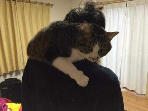 マフラー猫ーゆきお、私と妻の首に乗ってくる