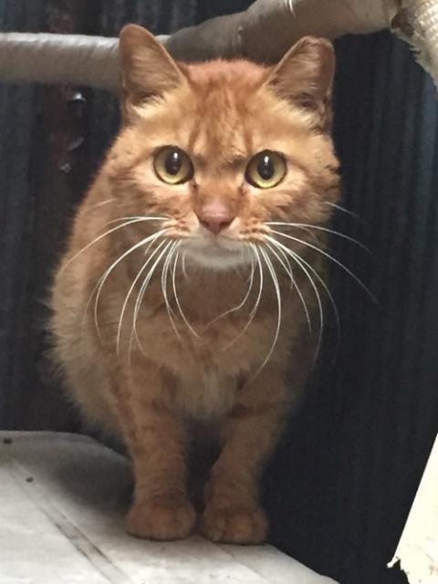 新橋繁華街の野良猫ー茶色の仔猫