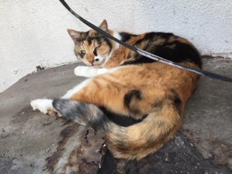 新橋駅近くの桜田公園の茶色い野良猫
