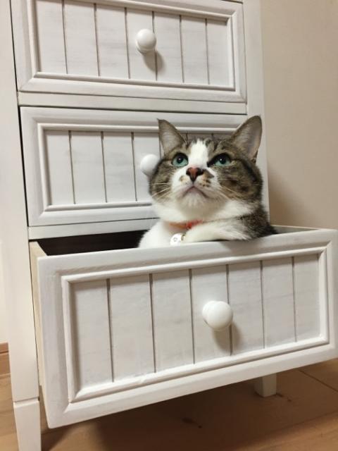 嶝野家具の2016年の福袋の中身と興奮する猫-ゆきお