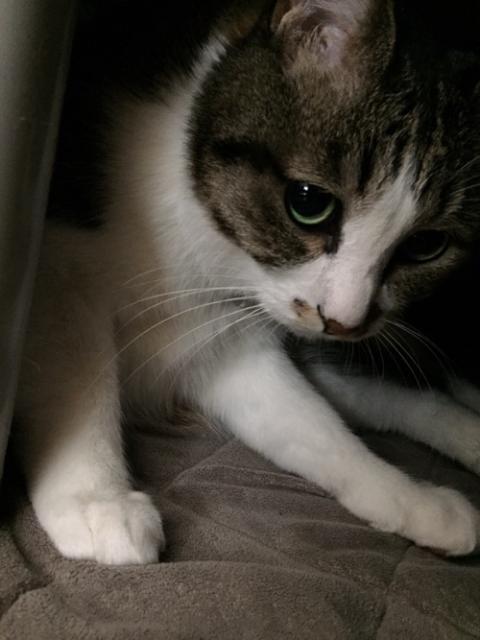 不安げな顔、舌を出した寝顔、尻尾で隠れた顔、どれもかわいい猫-ゆきお