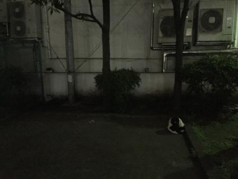 夜の桜田公園の猫2匹-はいってはいけませんの看板付近