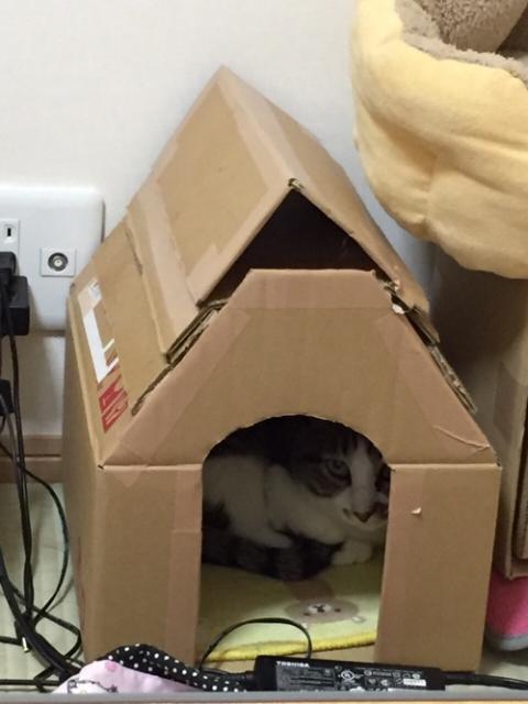 ゆきおハウスの中から睨んでくる猫-ゆきお