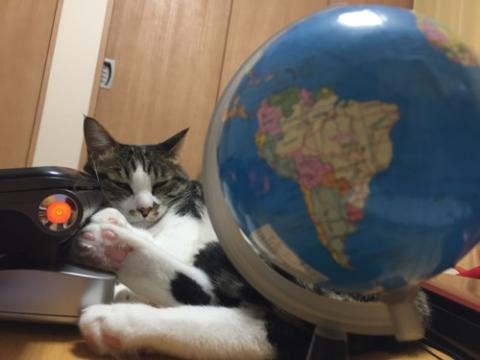 地球儀を見ながらノートパソコンVAIOを枕にする猫-ゆきお