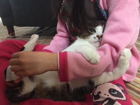 10歳の娘の腕にしがみつく猫-ゆきお