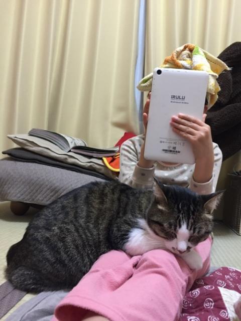 iRULUのWindowsタブレットで遊ぶ娘の膝に乗って眠る猫-ゆきお