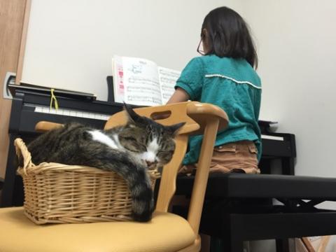 ピアノを弾く小学五年生の娘の背後で籠に入り眠る猫-ゆきお