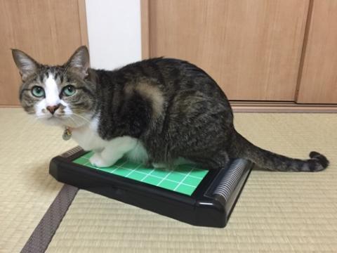 リバーシの盤上に座る猫-ゆきお
