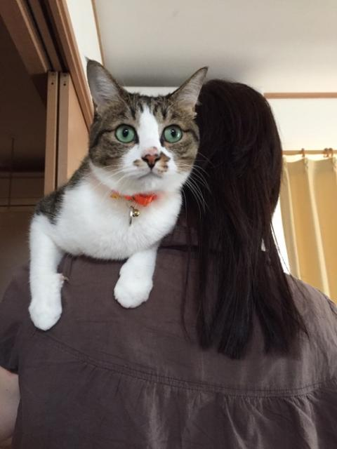 右前脚の爪をにょっきり出して妻の肩で甘える猫-ゆきお