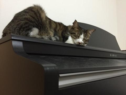KAWAI電子ピアノの上でお尻付近の毛をぶわっと逆立てて眠る猫-ゆきお