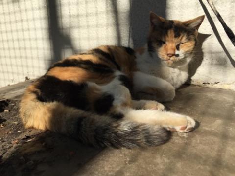 桜田公園で次々と見つかった野良猫3匹(白黒の猫と白茶黒の猫)