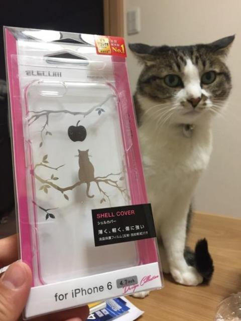 猫柄のiPhone 6の透明ケースに興味津々な猫-ゆきお