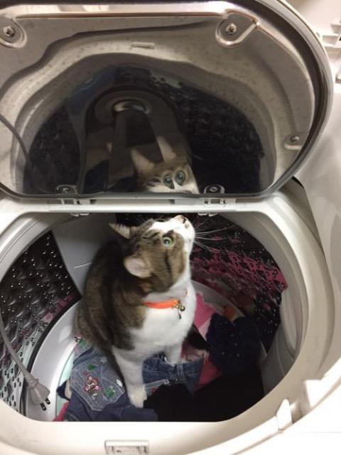洗濯機の中で隠れんぼする猫-ゆきお