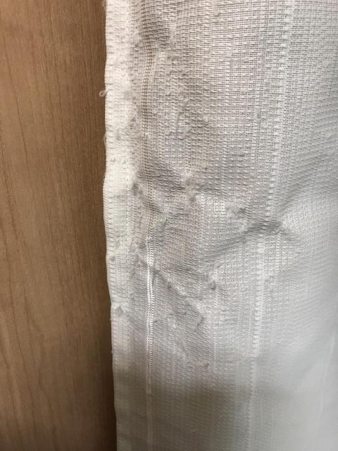 白いカーテンをボロボロにした猫-ゆきお
