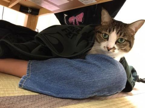 小学六年生の娘の膝上でブランケットに包まれる猫-ゆきお