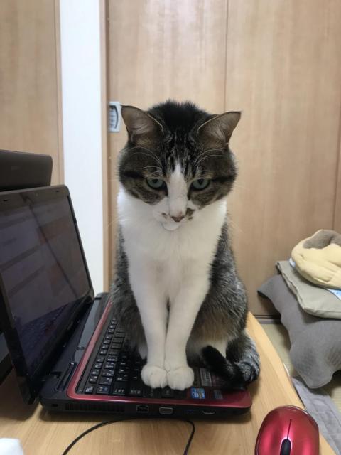猫、サイバー攻撃を受ける