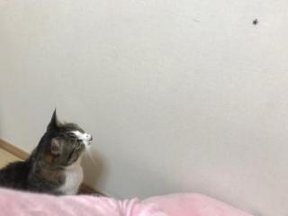 ハエトリグモを見つめる猫-ゆきお