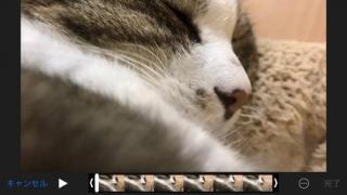 イビキをかきながらスヤスヤと眠る猫-ゆきお
