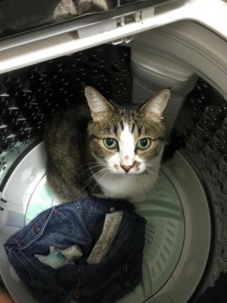 洗濯機の底から見上げてくる猫-ゆきお