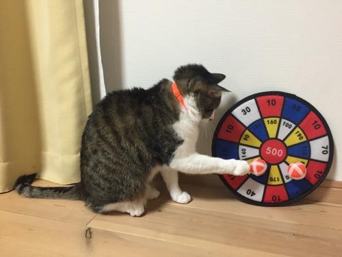 100円ショップダイソーのおもちゃ「ボールでダーツ」のボールを前脚で触る猫-ゆきお