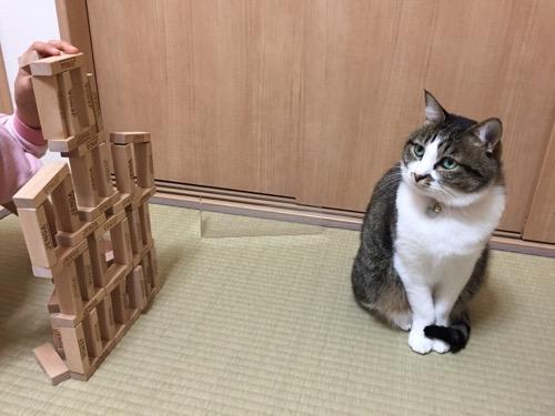 娘が組み立てるジェンガを見つめる猫-ゆきお
