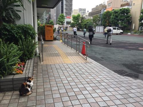 朝、通勤する人達を眺める桜田公園の猫