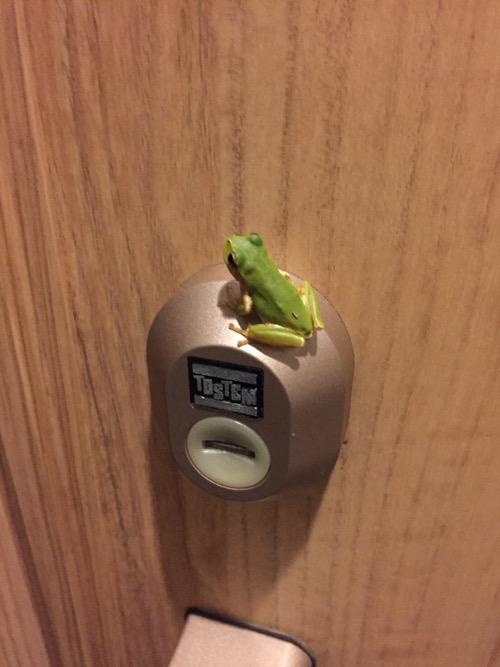 玄関ドアのTOSTEMの鍵穴の上に座るカエル