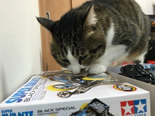 ミニ四駆「スーパーアバンテ ブラックスペシャル」の箱の絵に真剣な眼差しを向ける猫-ゆきお