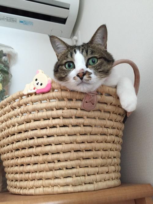 籠から前片脚をちょこんと出す猫-ゆきお