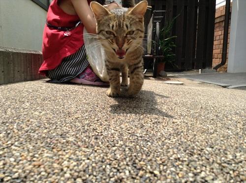 ポコペン横丁(愛媛県大洲市大洲本町3丁目)の近づいてくる野良猫