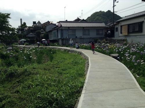 新谷花菖蒲園(愛媛県大洲市新谷町甲5)「しょうぶまつり」会場の菖蒲の隣にある道