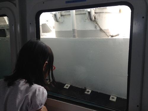 海中展望船「愛媛観光船ユメカイナ(愛南町西海観光船)」の海中展望室内の窓から外を眺める娘