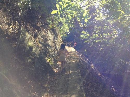 えひめ森林公園のキャンプ場にある山道