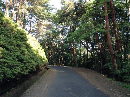 えひめ森林公園 谷上山第2展望台近くの道路