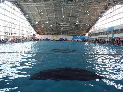 イヨテツスポーツセンターの室内プール(安全確認時のためプールに人が入っていない)