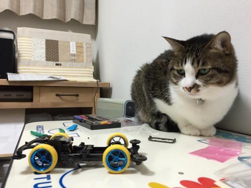 ミニ四駆「スーパーアバンテ ブラックスペシャル」の組み立て途中のボディを机の上で眺める猫-ゆきお
