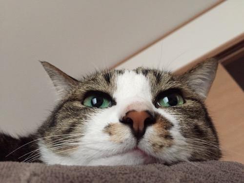 キラキラ目の猫-ゆきお