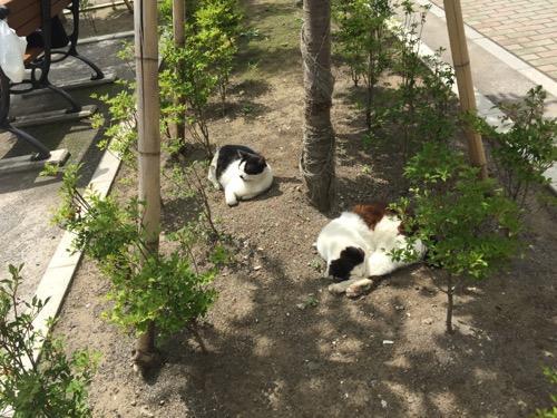 桜田公園の植木の地面で眠る猫2匹