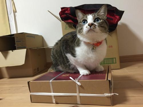 NEC PC-TW710CBS LAVIE Tab Wの段ボール箱に座り、上を見上げる猫-ゆきお