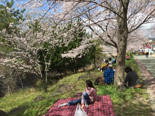 セブンスター石手店の隣にある石手川沿いの桜の木の下に敷いたレジャーシートの上に座る娘