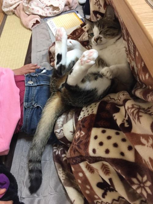 小学五年生の娘の膝上でコタツ布団にもたれて足を上げてウィンクする猫-ゆきお