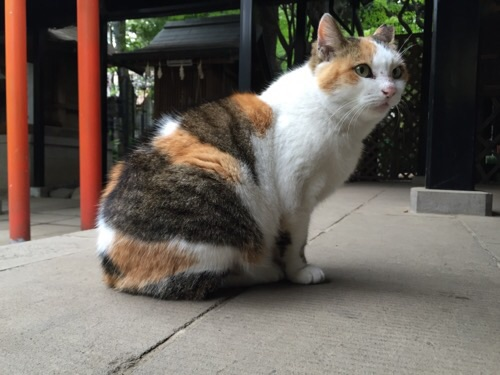 愛宕神社境内にいた猫(顔を横に向けている)