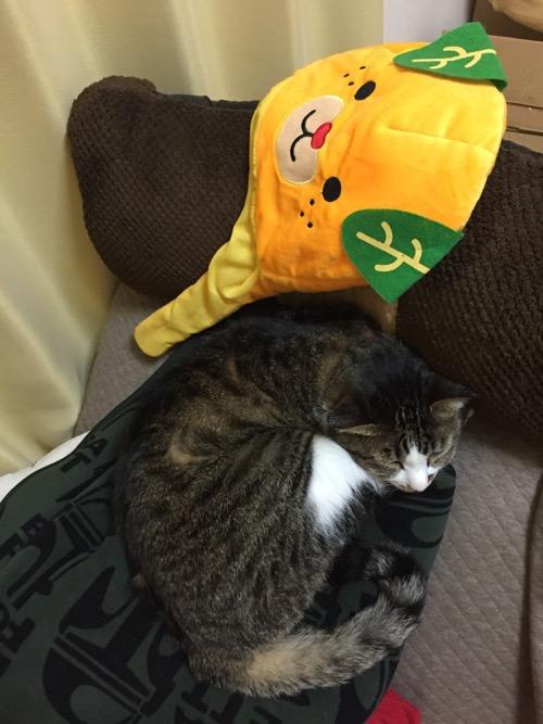 みきゃんの被り物の下で眠る猫-ゆきお