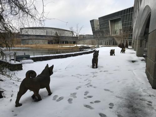 宮城大学キャンパス内の雪原を歩く犬たちの後ろ姿