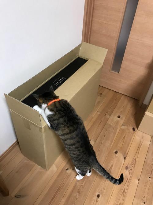 「TOR マッサージシート タタキもみ AX-HXT218rd レッド」が入っている段ボール箱の蓋につかまり立ちをして中を覗き込む猫-ゆきお