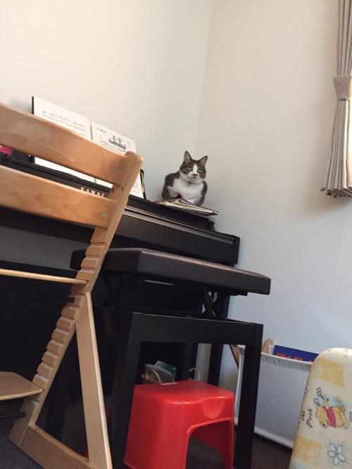 KAWAIの電子ピアノの上から監視する猫-ゆきお